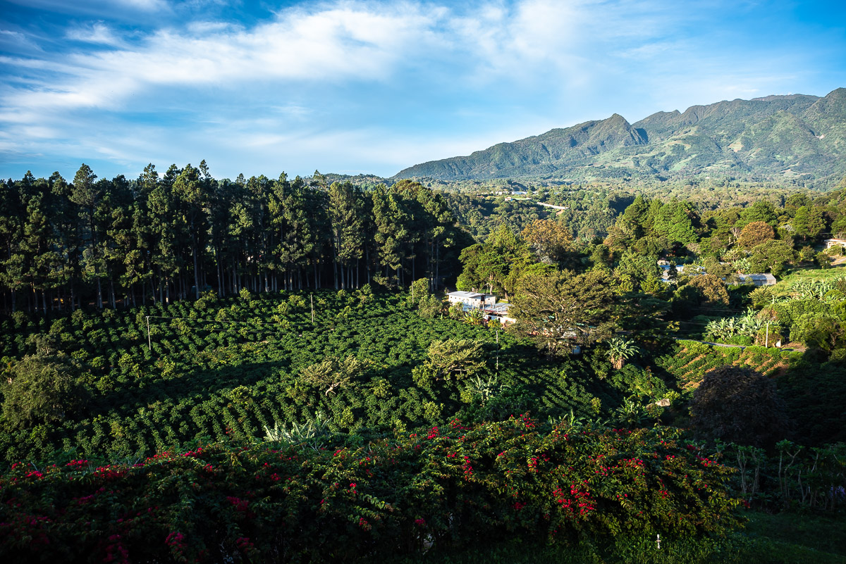 View of coffee plantations and Baru volcano in Panama