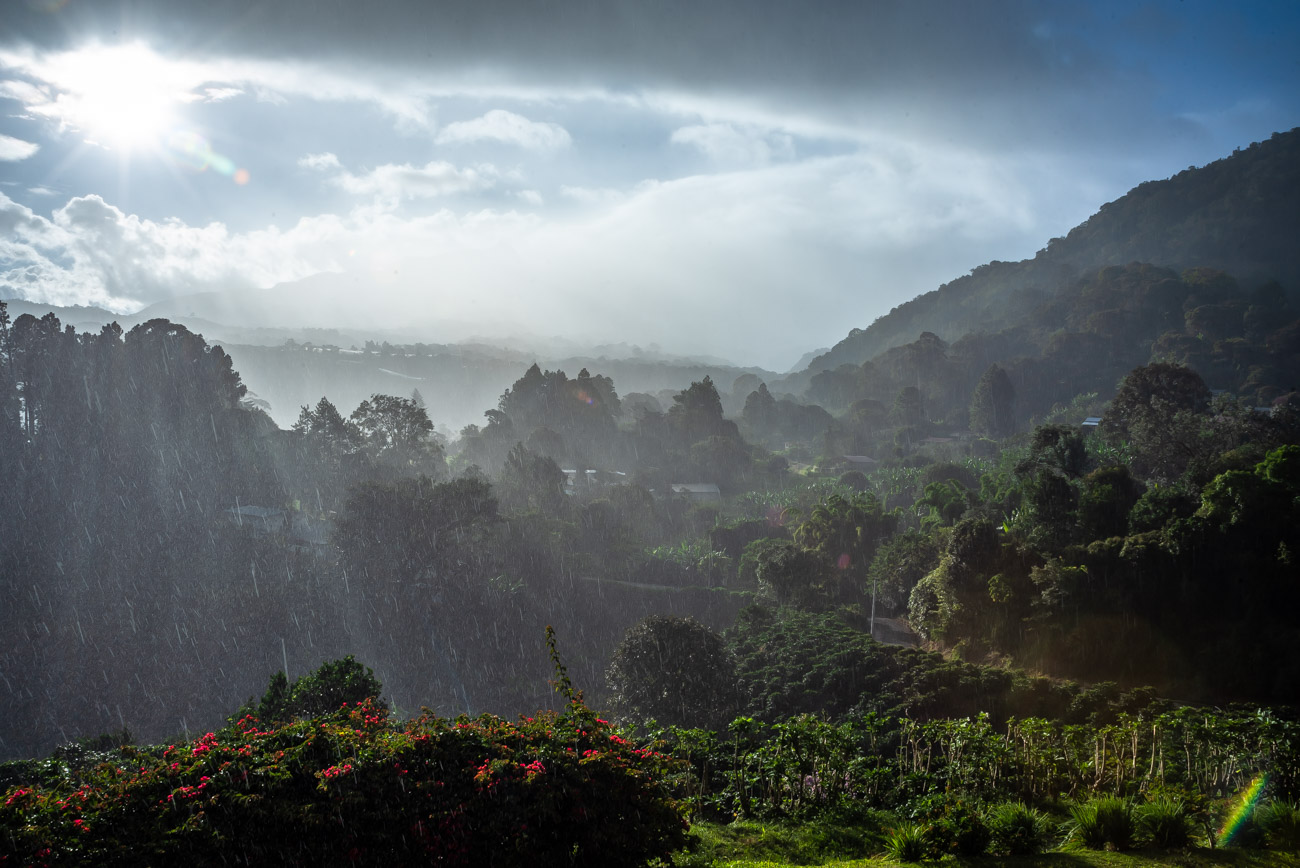 Rain over coffee plantations