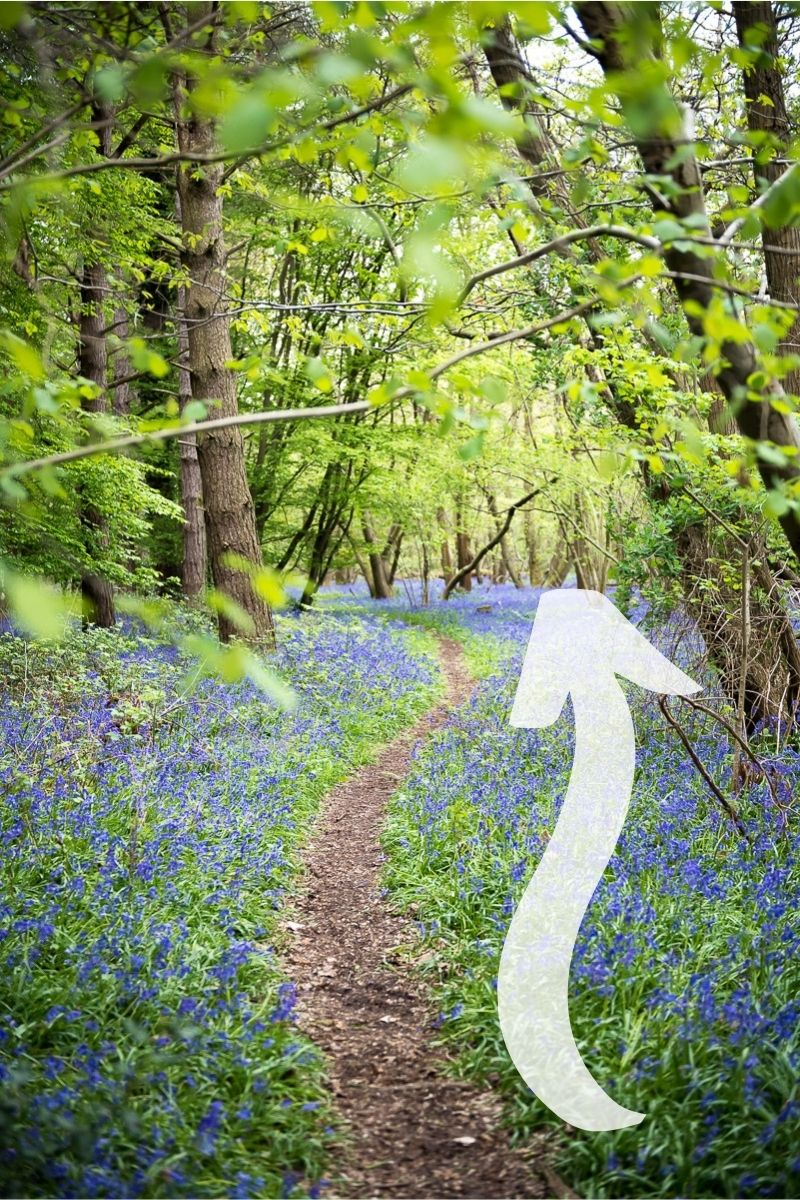 Example of leading lines in travel photography, bluebell forest