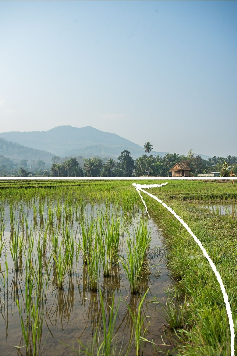Example of leading lines in travel photography, rice paddies landscape