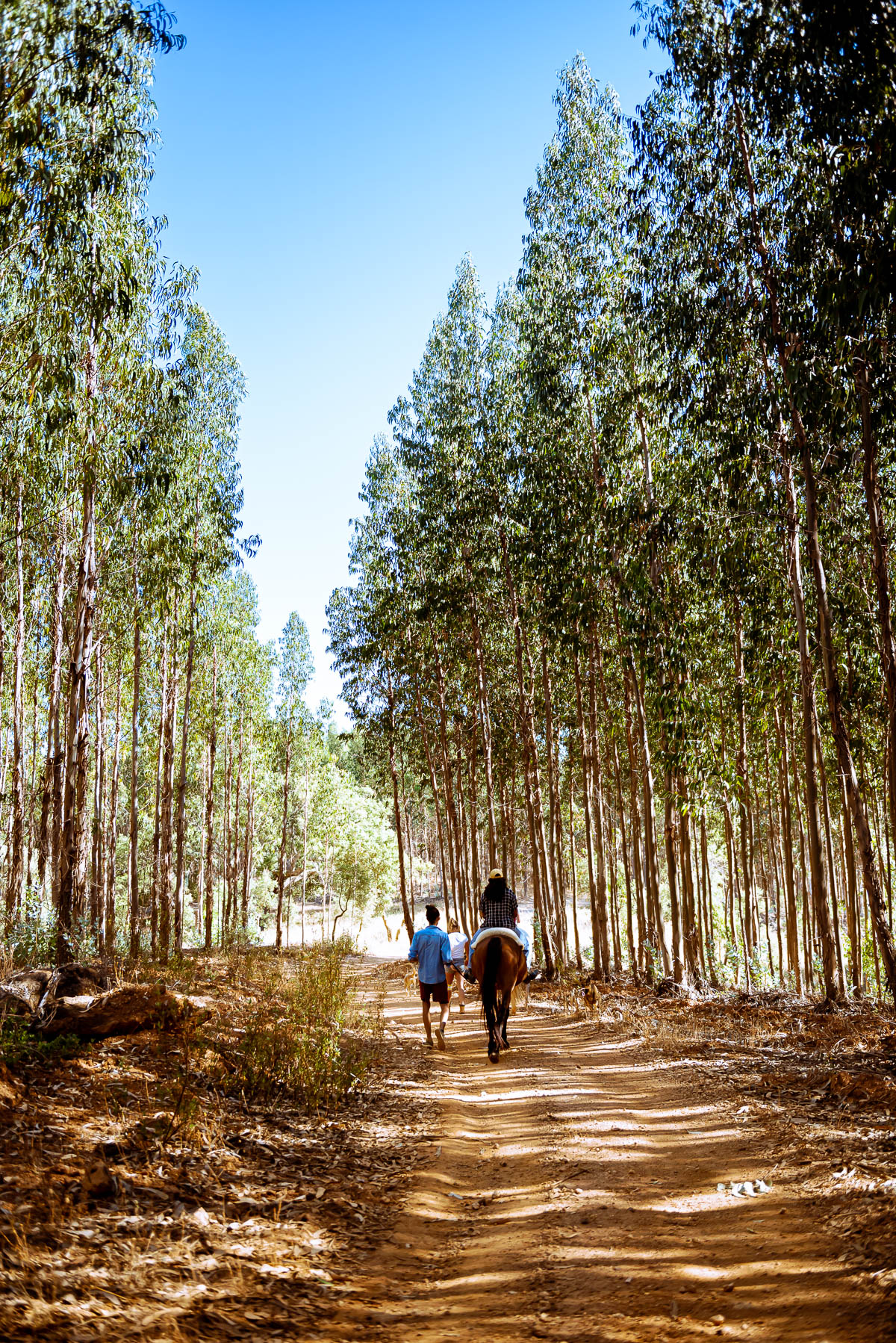 Example of leading lines in travel photography, trees and path